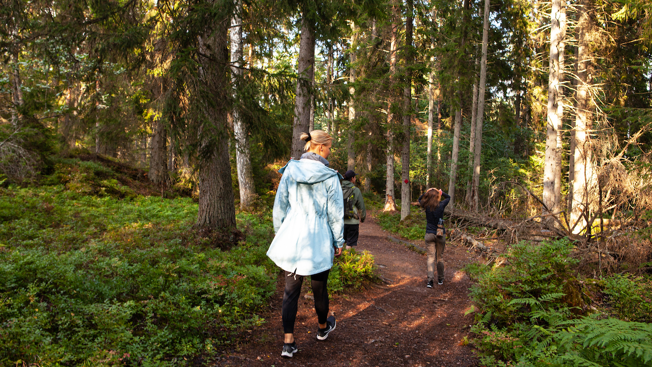 people walking through forest path with a guide in a finnish archipelago forest