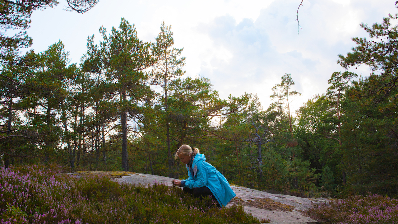 woman picking flowrrs in a finnish archipelago forest area