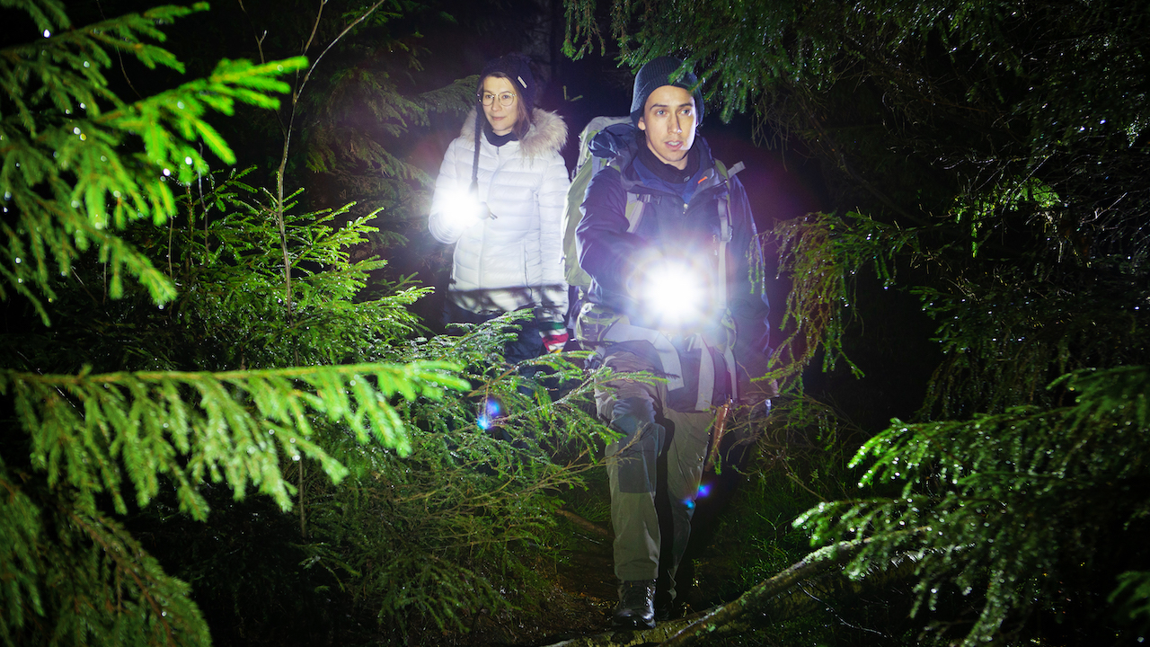 woman and man walking in a national park during nigth with flashlights