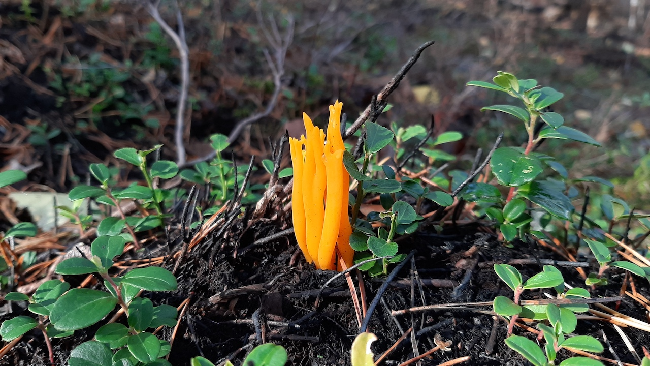 weird mushroom in a finnish national park
