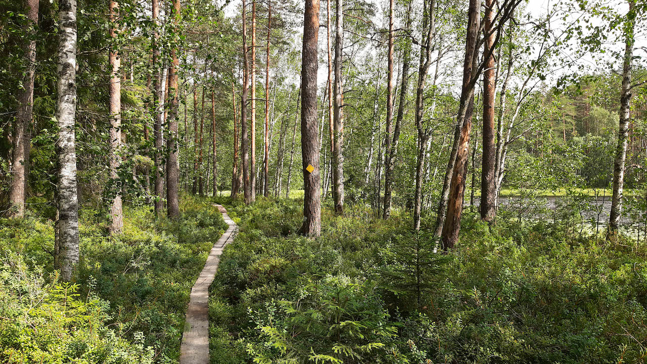 forest path in a finnish national park