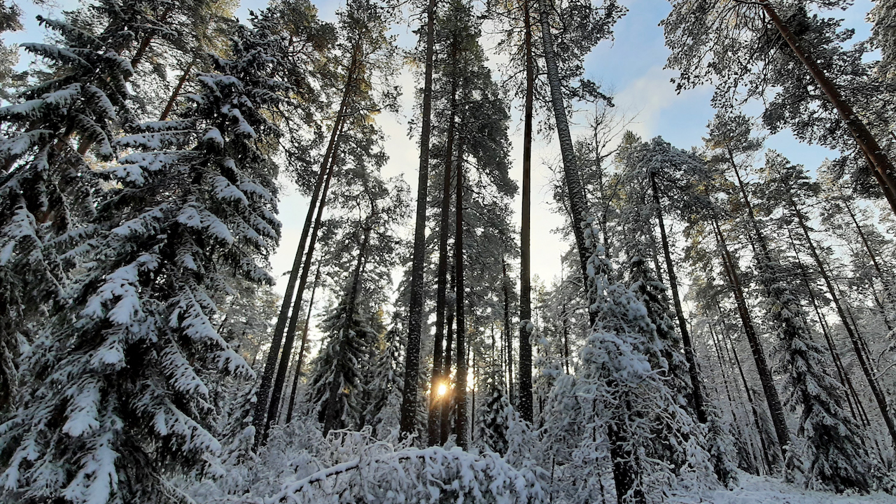 winter forest with snow and sun in a national park
