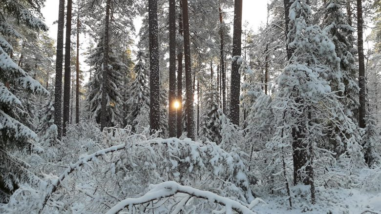 winter wonderland forest picture with a sun