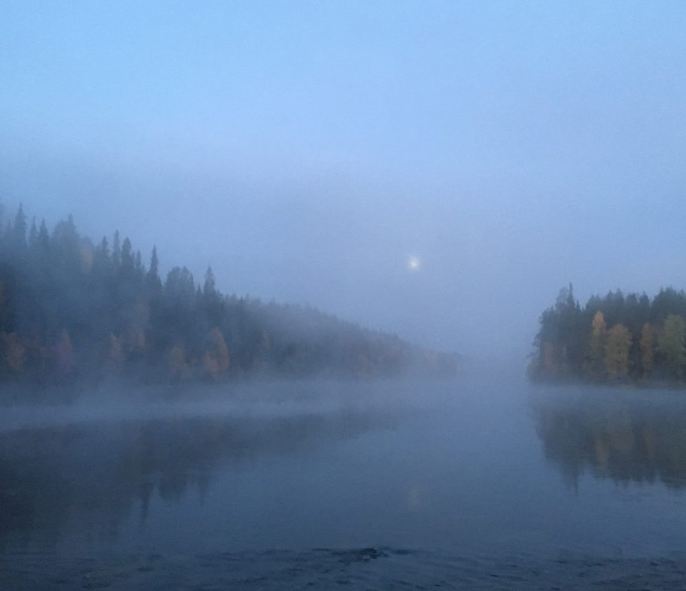 russian taiga forest in the morning overlooking foggy oulanka river