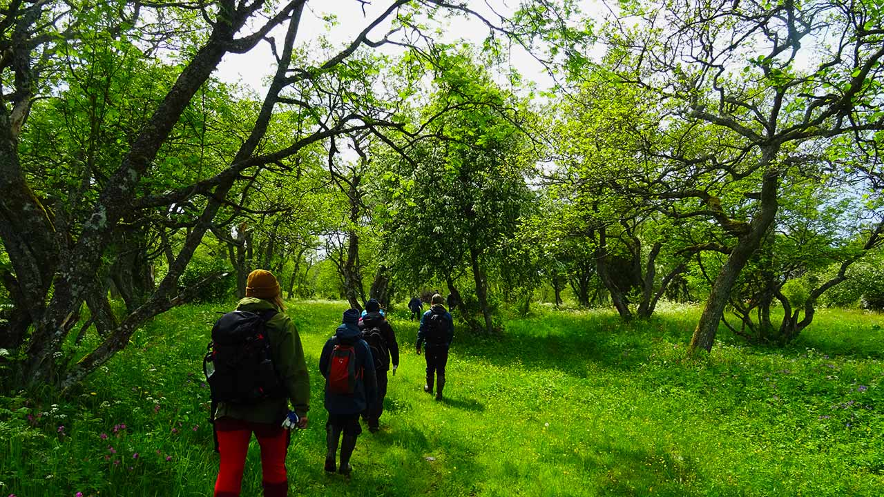 meadow and forest photo with students walking in archipelago national park