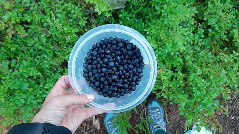 a bucket full of handpicked blueberries