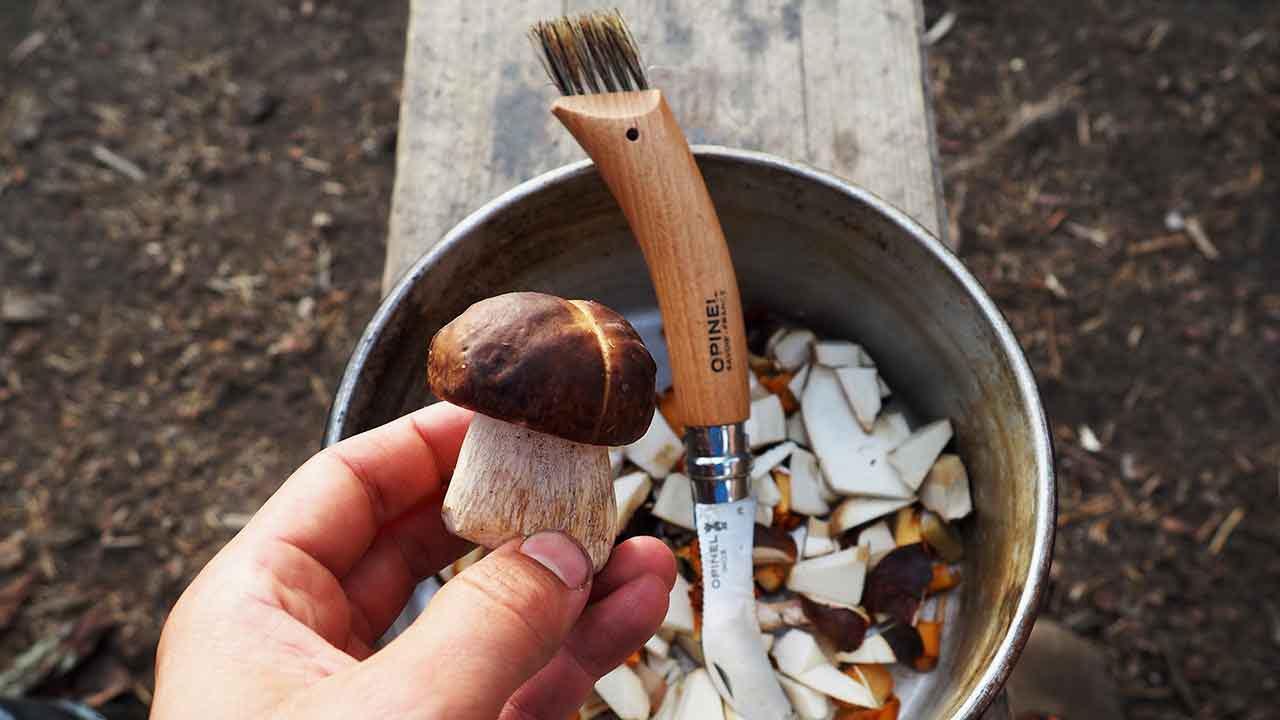 small penny bun found in mushroom hunting tour helsinki finland
