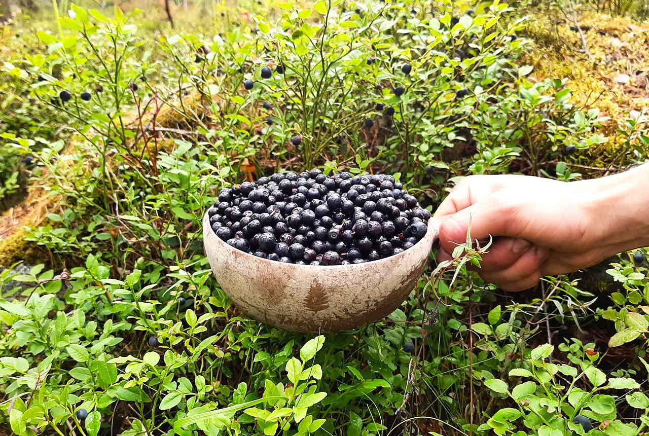 blueberry picking tour in finnish national park