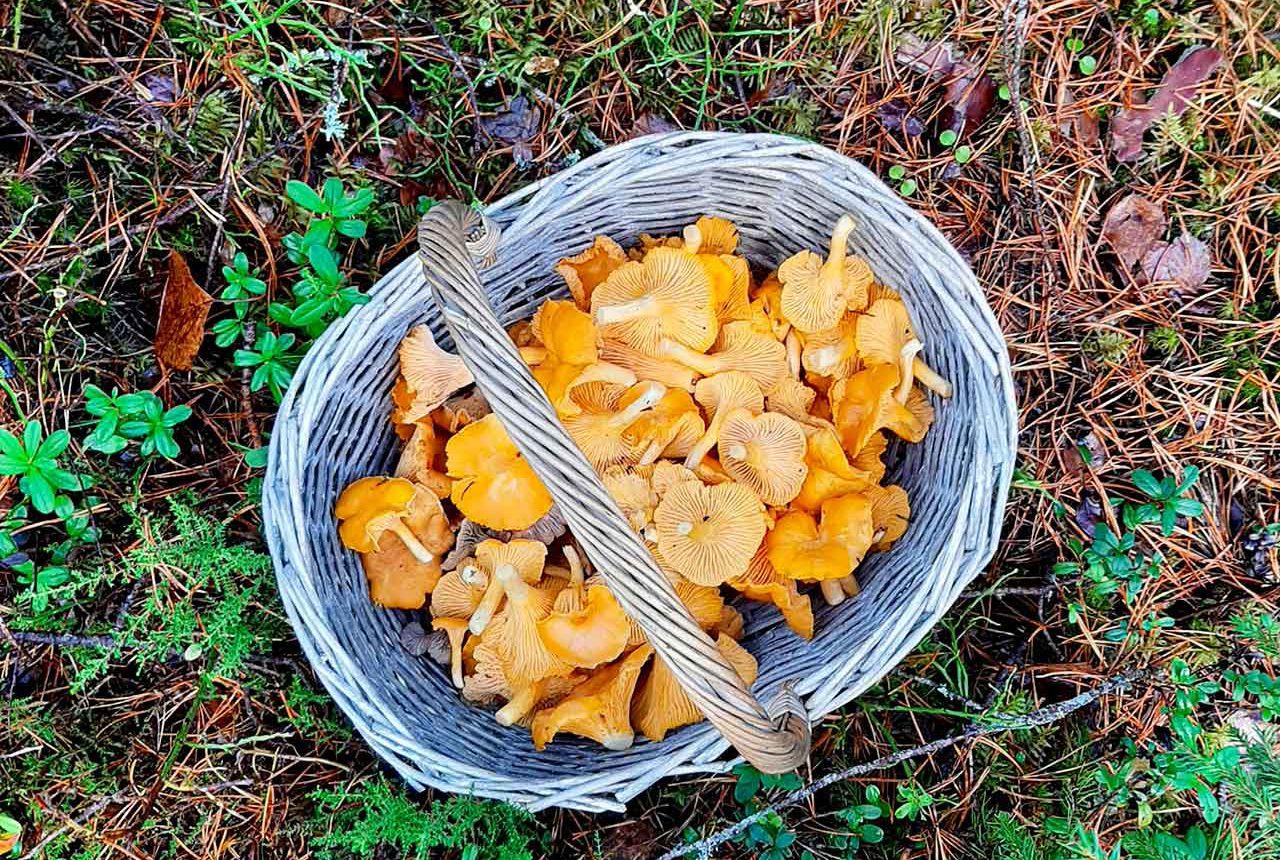 mushroom picking tour from helsinki